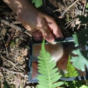 experimentieren im Wald