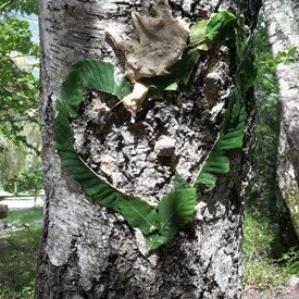 Baum mit Blätterherz